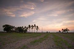 Сухая почва рисовых полей Стоковое Изображение