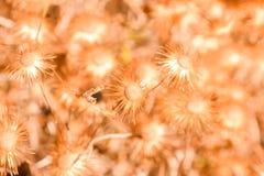 Сухая предпосылка цветка стоковые изображения rf