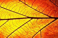 Сухая предпосылка листьев и текстурировано Стоковая Фотография