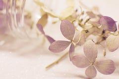 Сухая розовая гортензия цветет на белой предпосылке песка стоковые фотографии rf