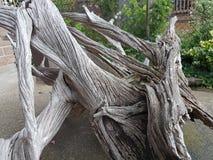 Сухая текстура дерева от поля стоковое изображение
