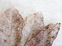 Сухая текстура детали листьев, отборный фокус Стоковая Фотография