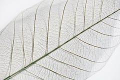 Сухая текстура детали лист Стоковая Фотография RF