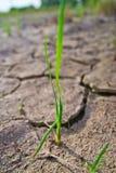 Сухая текстура земли Стоковое фото RF