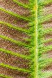 сухая текстура листьев Стоковые Фото