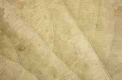 сухая текстура листьев Стоковая Фотография