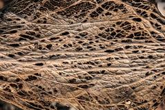 Сухая текстура листьев Стоковые Изображения RF