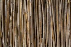 Сухая текстура стены тростников стоковое изображение rf