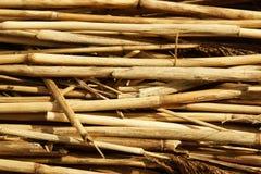 Сухая текстура тростников Органические обои природы желтой тросточки стоковая фотография rf