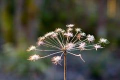 Сухая трава в осени Стоковые Изображения