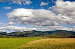 Сухая трава в поле Стоковые Изображения RF