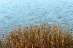 Сухая трава в пруде иллюстрация вектора