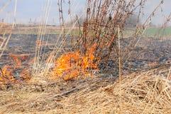 Сухая трава горит в поле Стоковые Фото
