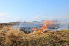 Сухая трава горит в поле Стоковое Изображение