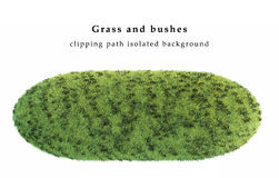 Сухая трава и кусты изолированные на белой предпосылке Стоковое фото RF