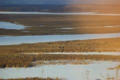 Сухая трава и снежное поле стоковое фото