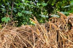 Сухая трава лежа вне стойла стоковое фото rf