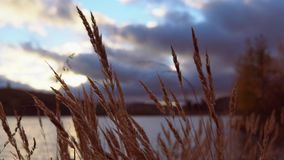 Сухая трава между облаками на заходе солнца видеоматериал