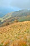Сухая трава на наклоне Стоковое Изображение