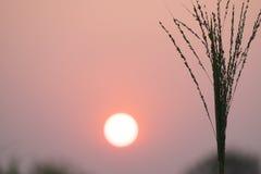 Сухая трава на предпосылке неба вечера Стоковое Изображение