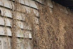 Сухая трава на старой стене цемента Стоковая Фотография RF