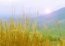 Сухая трава на холме Стоковая Фотография RF