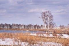 сухая трава небо гор dombaj caucasus belalakaya серое Белый снежок overcast Стоковая Фотография