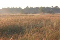 сухая трава поля степь туман туманно стоковые изображения rf
