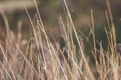 Сухая трава поля Стоковые Фотографии RF