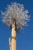 Сухая трава связанная к ручке Стоковые Изображения