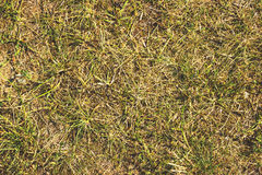 Сухая трава, сено, солома текстурировала предпосылку границы Стоковые Фото