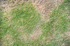 Сухая трава Стоковая Фотография