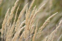 сухая трава Стоковое Изображение RF