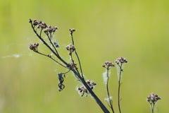 сухая трава Стоковое фото RF