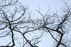 Сухие ветви в темном небе вечера Стоковое фото RF