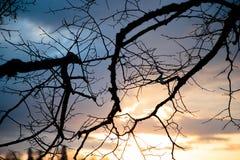 Сухие ветви дерева против неба Стоковое Изображение RF