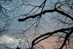 Сухие ветви дерева против неба Стоковые Изображения RF