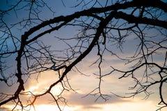 Сухие ветви дерева против неба Стоковые Фотографии RF