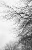 Сухие ветви дерева во время падения Стоковые Изображения RF
