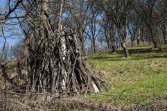 Сухие ветви дерева в луге фермы Стоковая Фотография RF