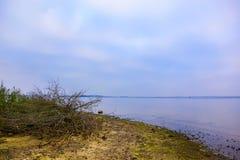 Сухие ветви дерева на береге моря Стоковая Фотография RF