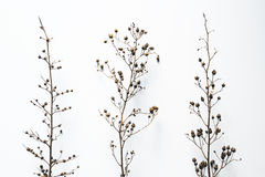 Сухие ветви на белой предпосылке стоковое фото rf