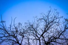 Сухие ветви на дереве в осени Стоковое фото RF