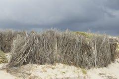 Сухие ветви на пляже Стоковое Фото