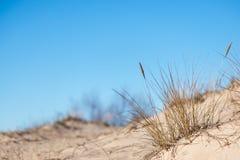Сухие ветви травы Стоковые Фотографии RF