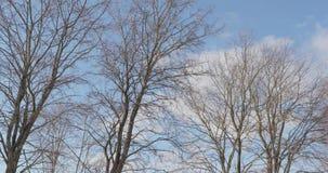 Сухие деревья против видео 4k неба акции видеоматериалы