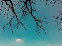 Сухие дерево и небо Стоковое Изображение RF