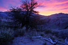 Сухие деревья около Анд на заходе солнца Стоковая Фотография