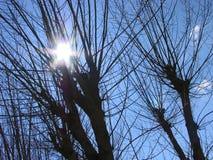 Сухие деревья подсвеченные Стоковые Изображения RF