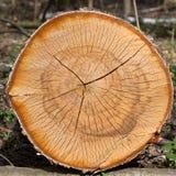 Сухие журналы дерева березы Стоковые Фотографии RF